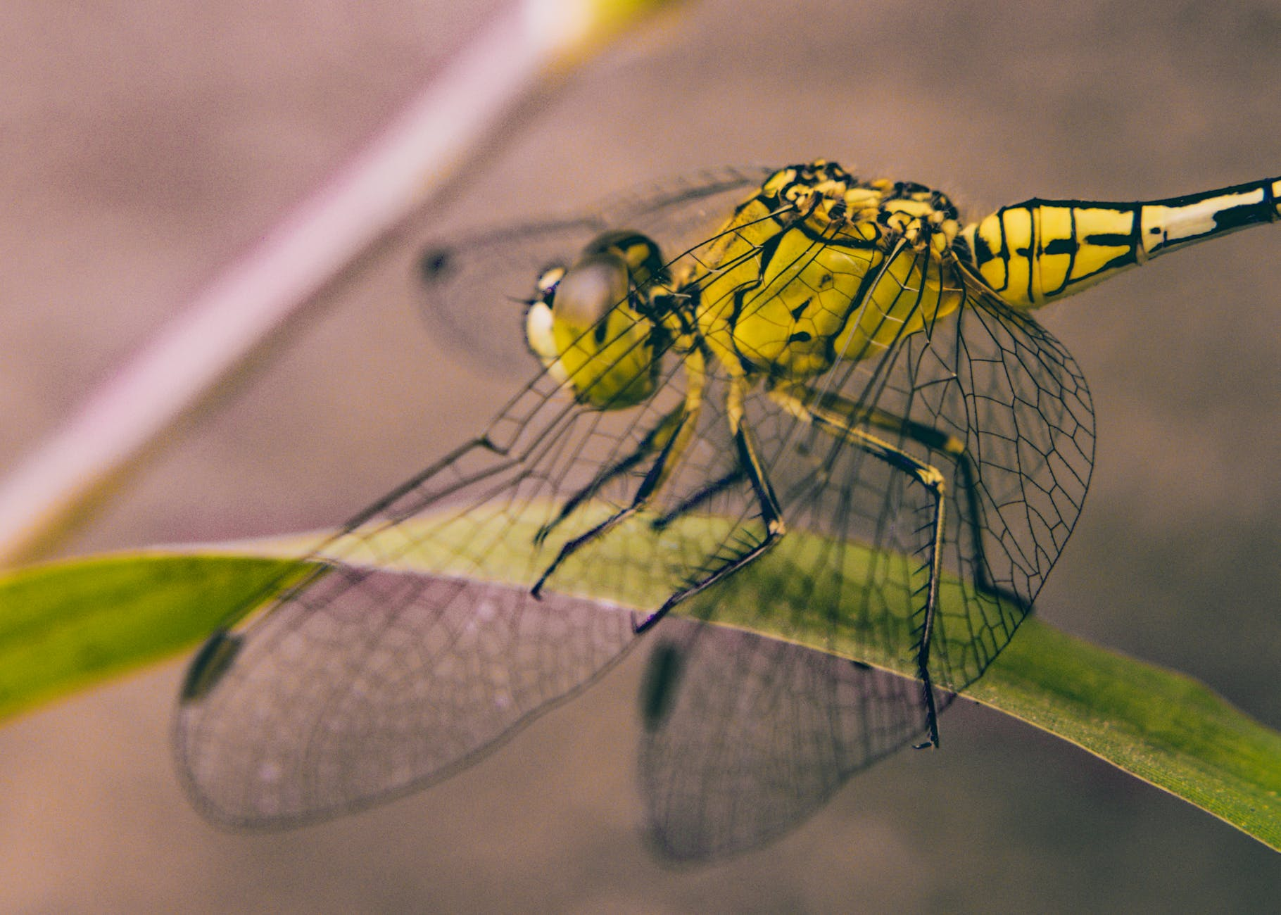 close up photography of dragonfly